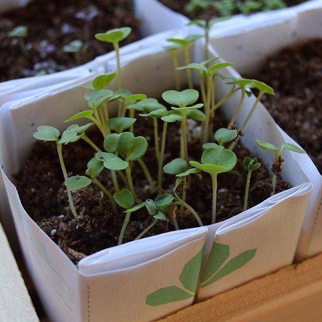 Oh, hi there. . . . #plants #seeds #seedstarting #seedkit #windowsillgarden #spring