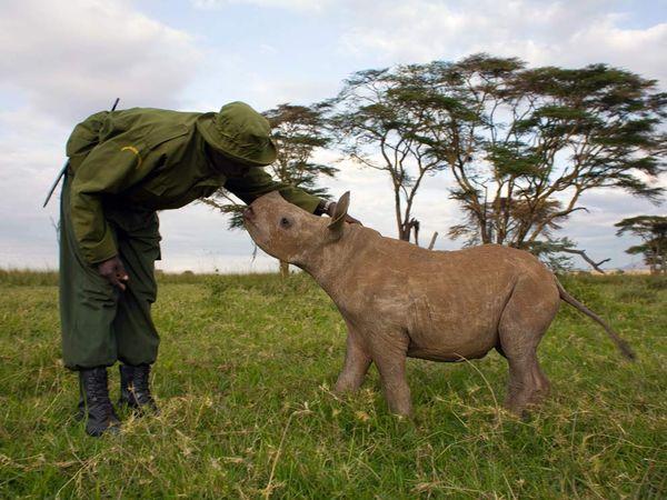 A Park Ranger meets a Baby Rhino