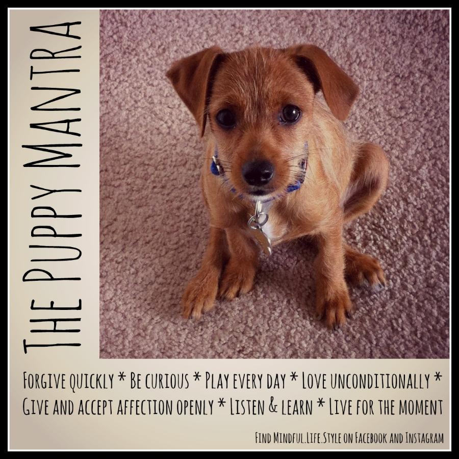 puppymantra.jpg