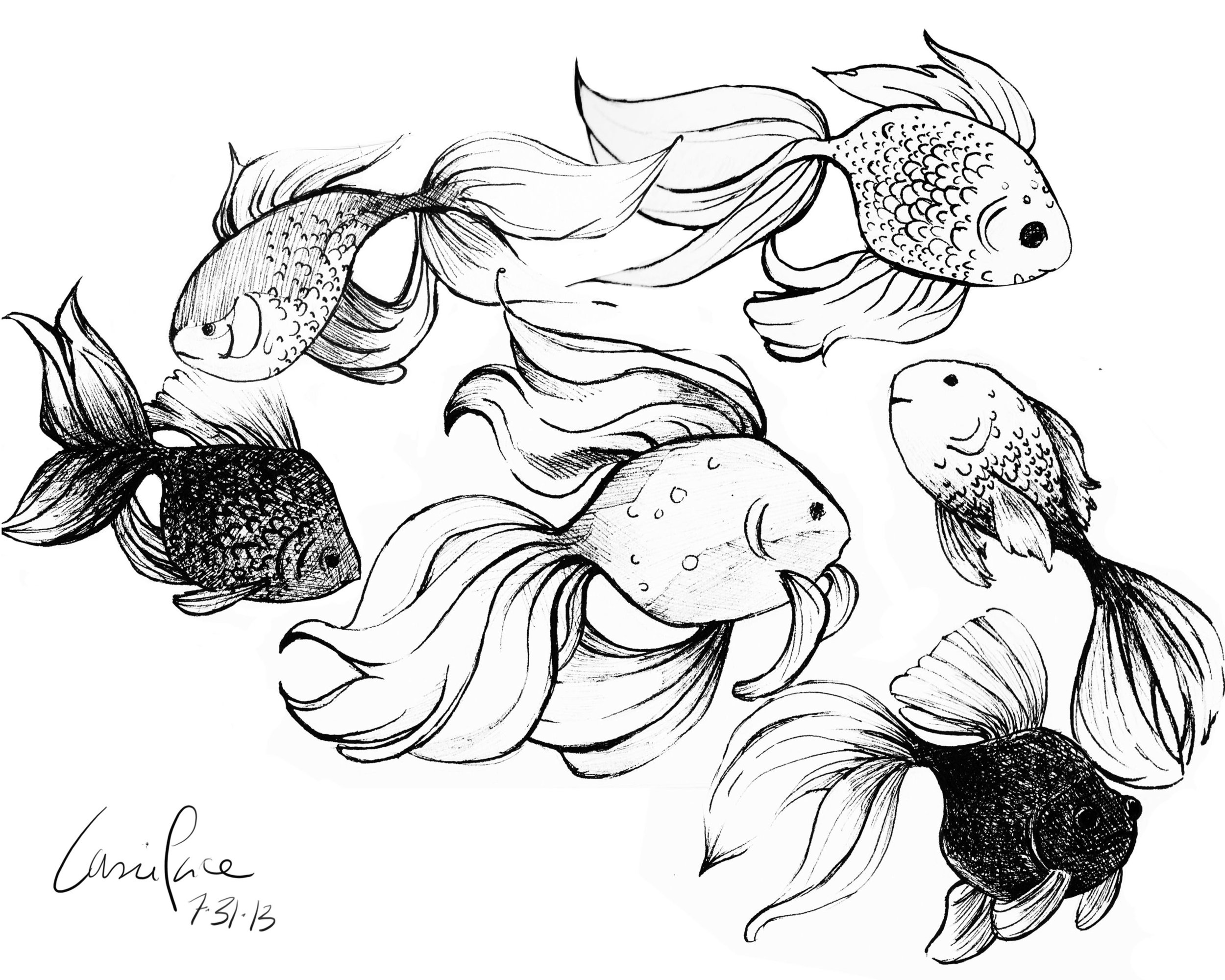 goldfish sketches copy