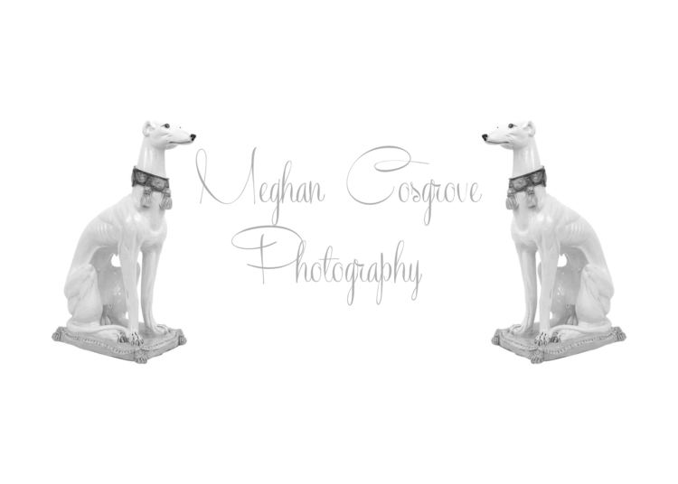meghan cosgrove photography
