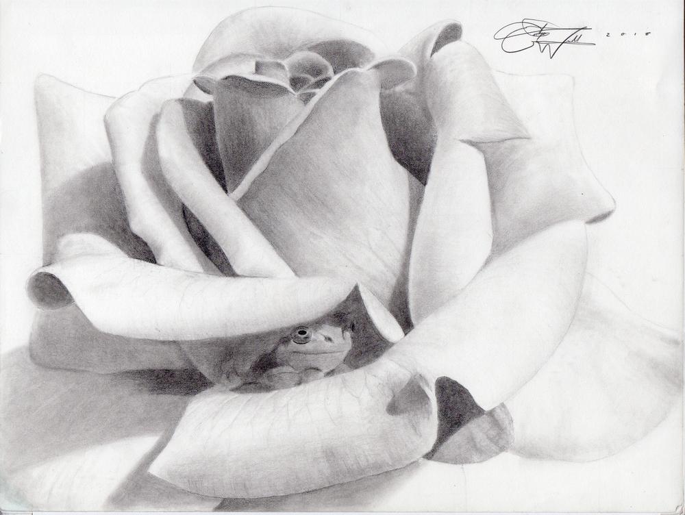 Frog-Rose.png