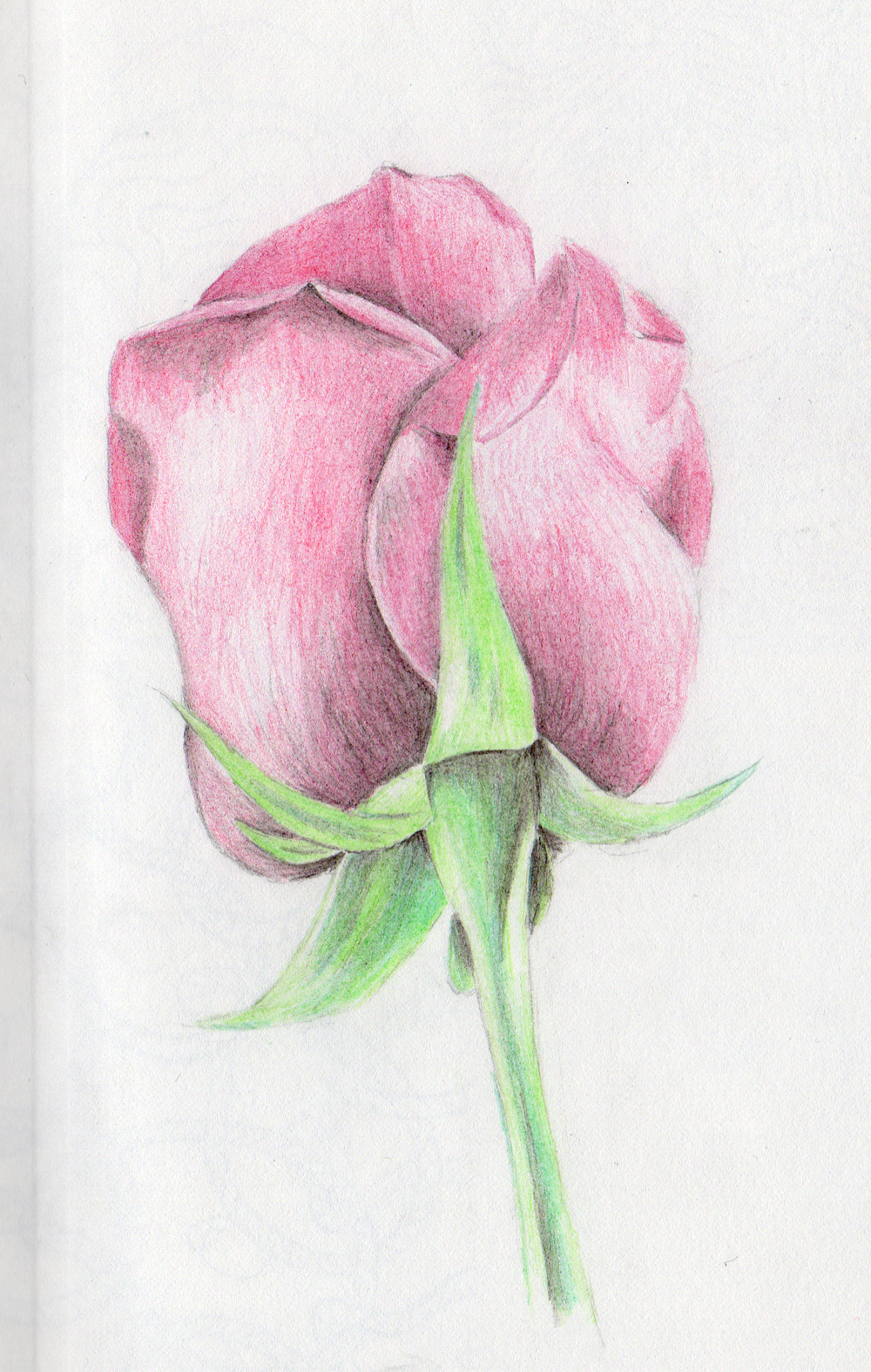 rose colored pencil.png