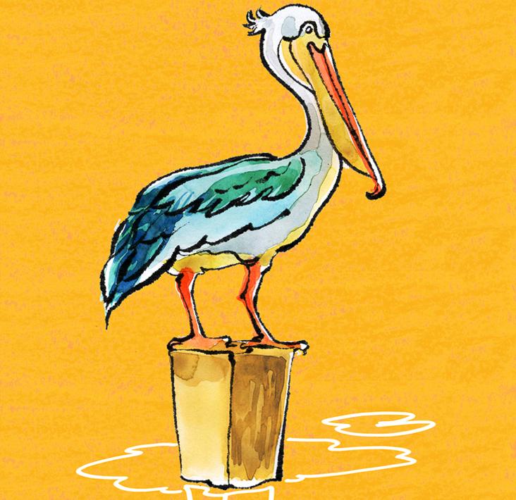 Pelican-.jpg