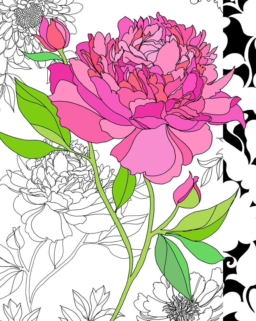 Pink-&-Black-Peony.jpg