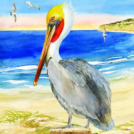 Pacifica Pelican.jpg