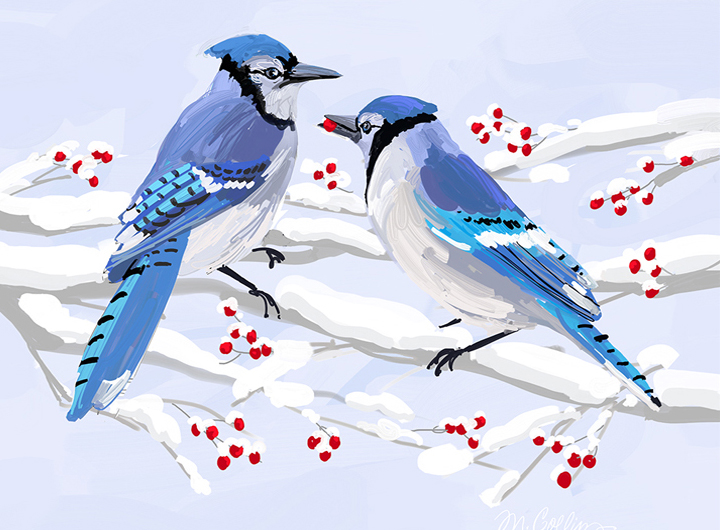 Winter Jays & Berries.jpg