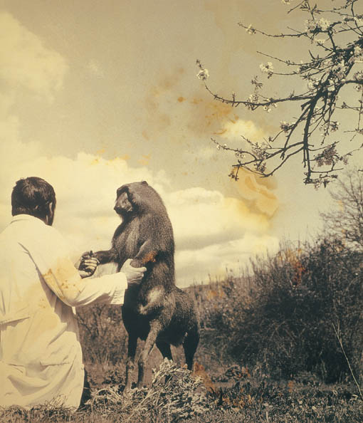 Joan Fontcuberta and Pere Formiguera,  Centaurus Neandertalensis  from the Fauna series by Joan Fontcuberta and Pere Formiguera, 1987