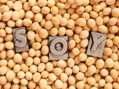 Soybeans Good For Dogs