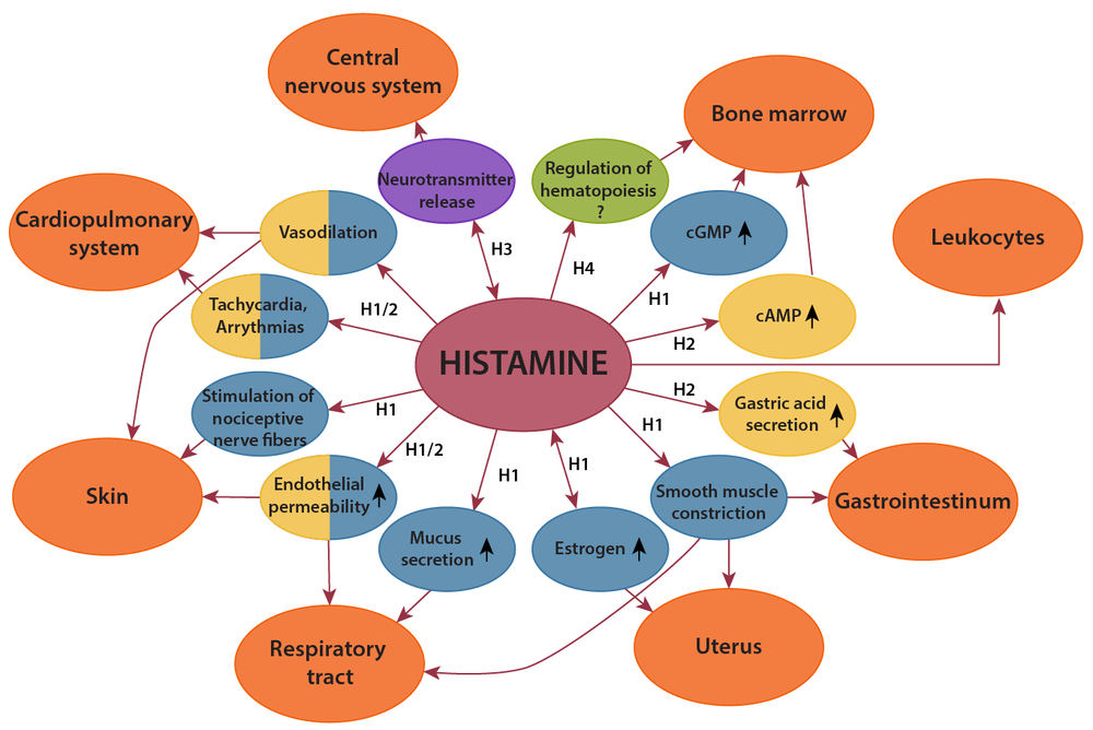 Do you have a Histamine intolerance      The Gut Healer