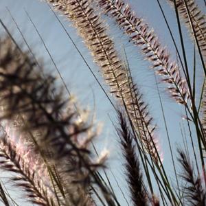 Sarah Buehler Photography www.sarahbuehlerphotography.com/