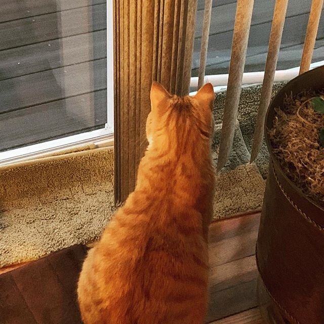 Some people are too busy looking through the window to see the blinds