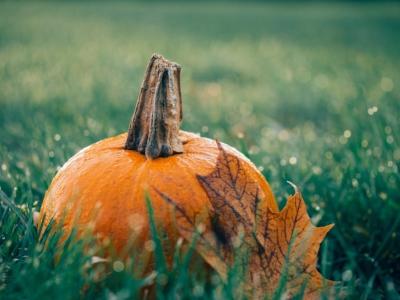 pumpkin-1030817_1280.jpg