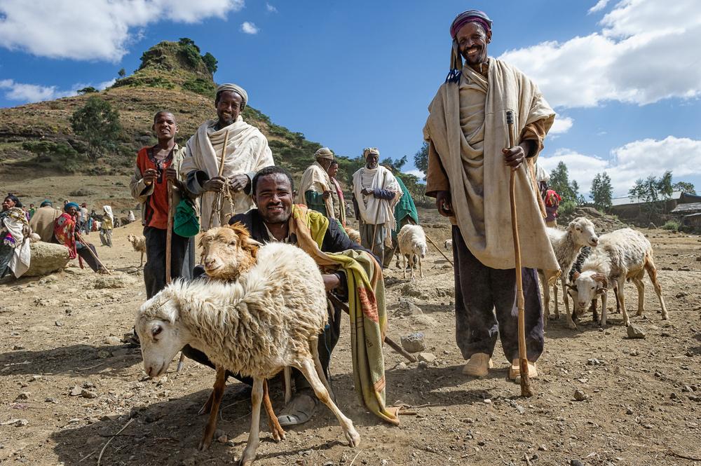 Ethiopian Shepherds