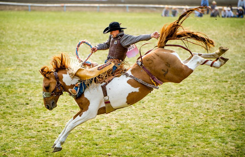 rodeo (2 of 2).jpg