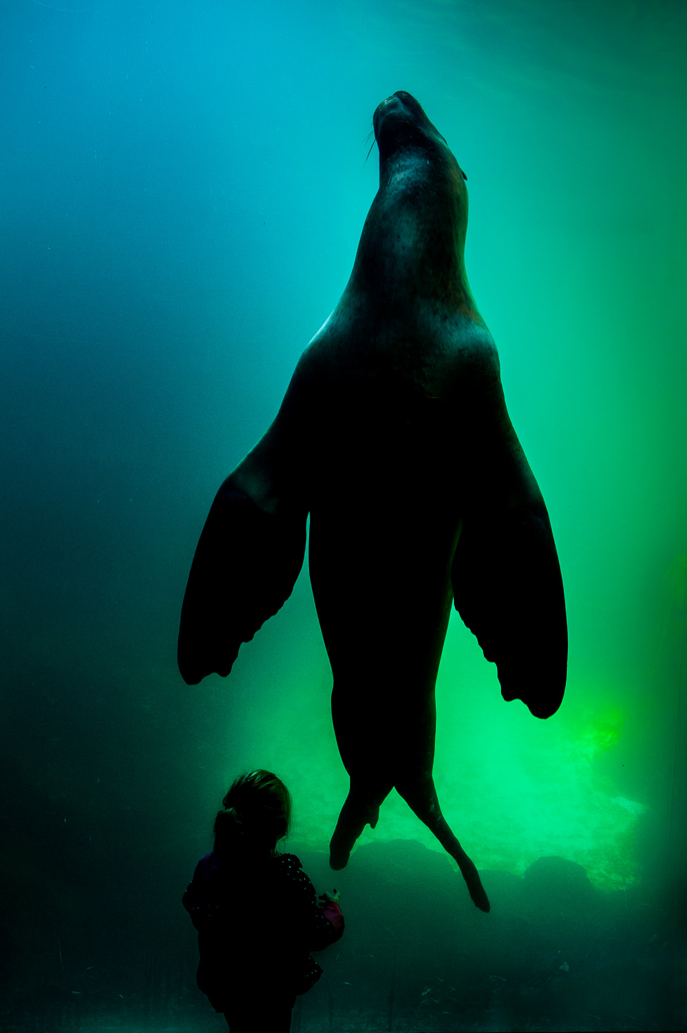 Sea Lion (1 of 1).jpg