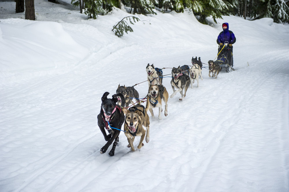 Sled Team Out on the Trail