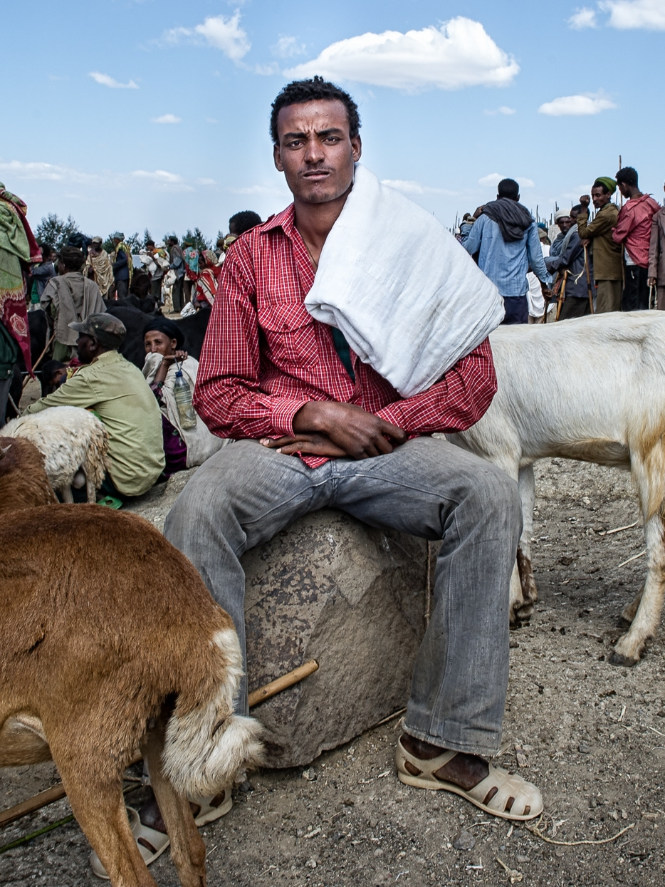 Ethiopian Shepherd