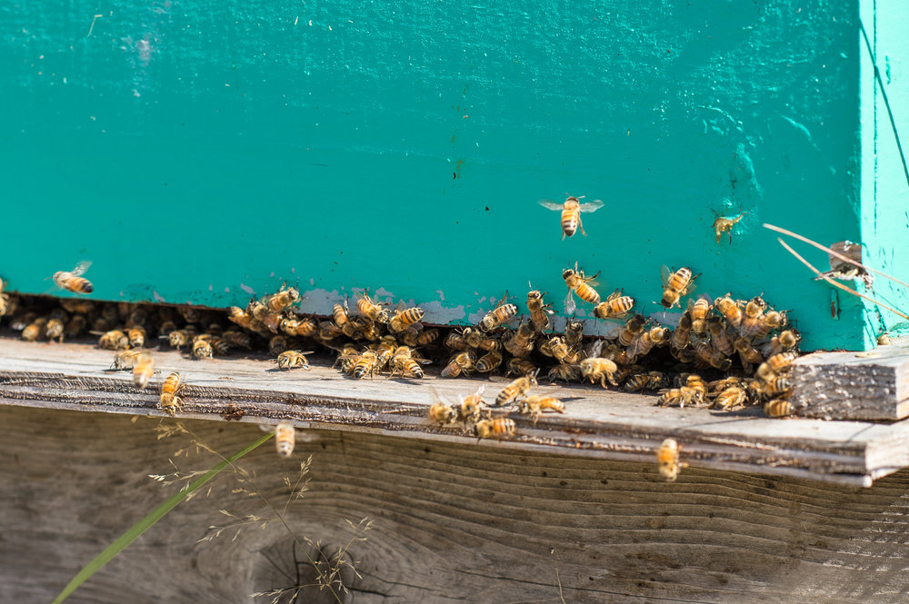 Croft Bees