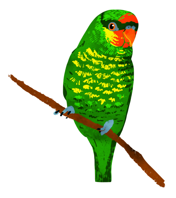 Animal 1: Bird