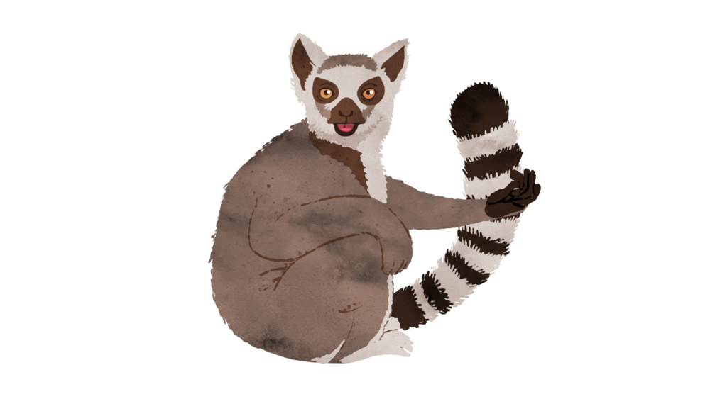 Animal 2: Lemur