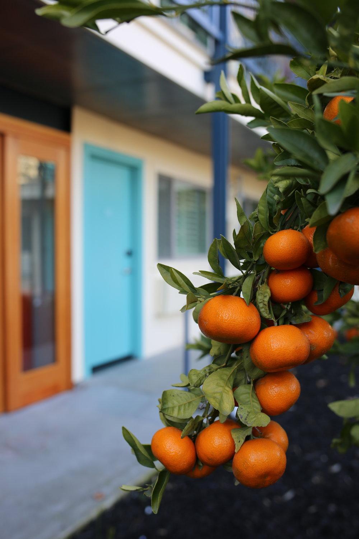 Oranges at the Astro Motel