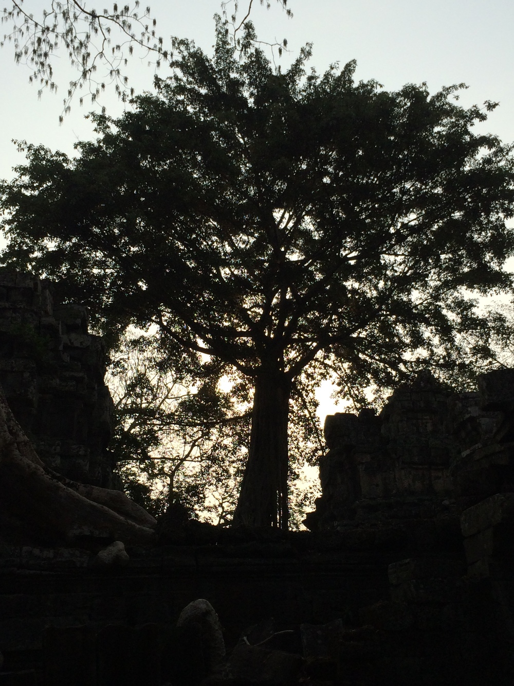 Ta Prohm (The Tomb Raider Temple)