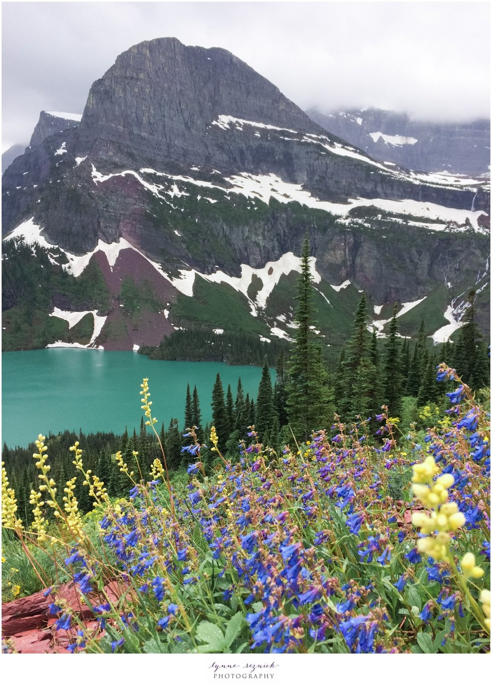 wildflowers overlooking Grinnell Lake