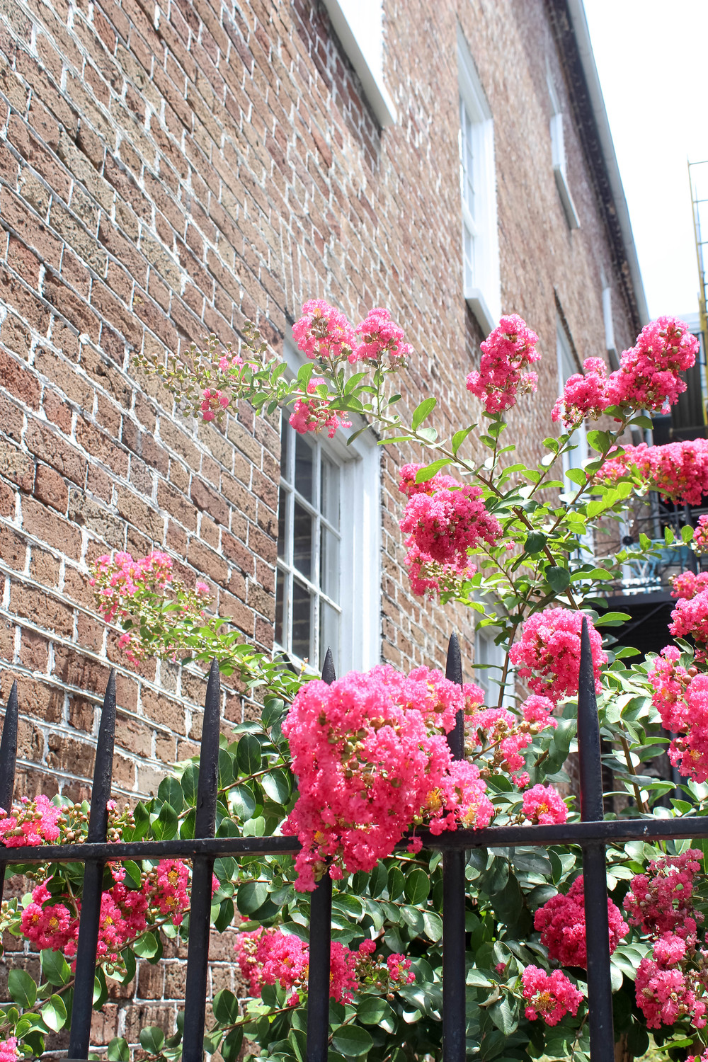 24 Hours in Charleston | Freckled Italian
