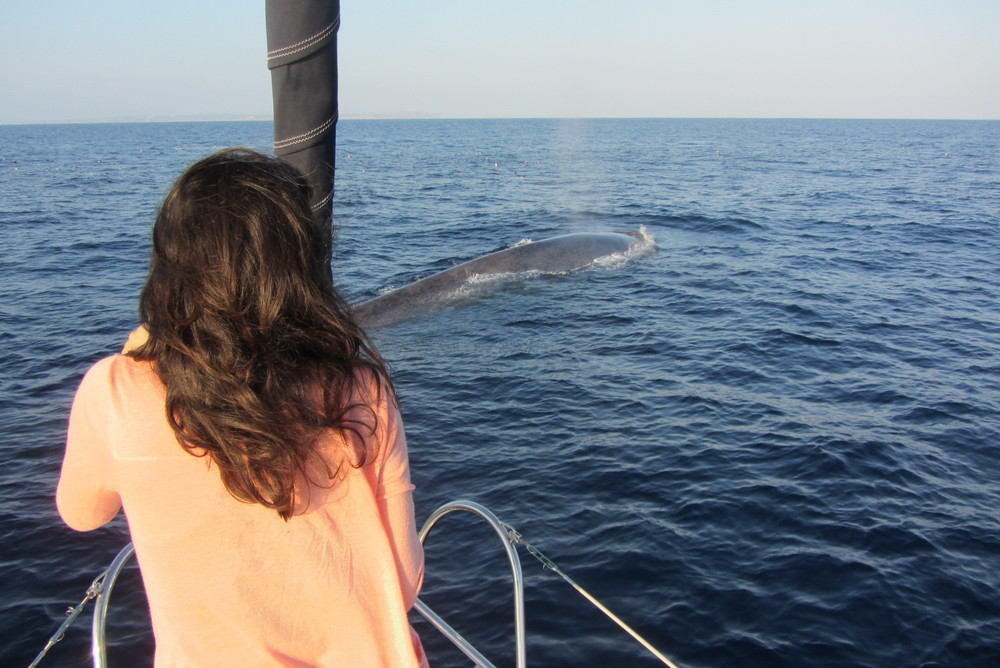 Blue Whale Watching San Diego