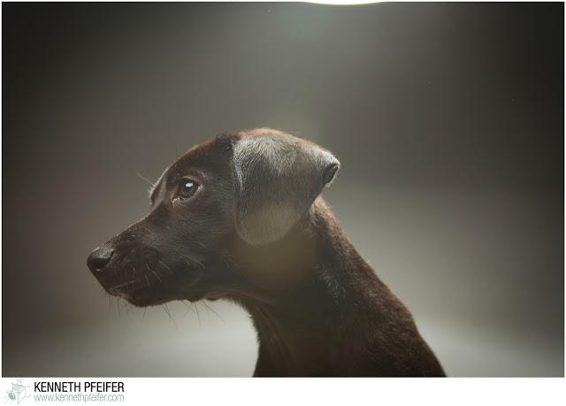 Puppy%2BPhoto%2BShoot-276.jpg