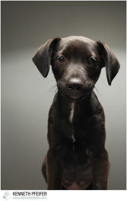 Puppy%2BPhoto%2BShoot-235.jpg