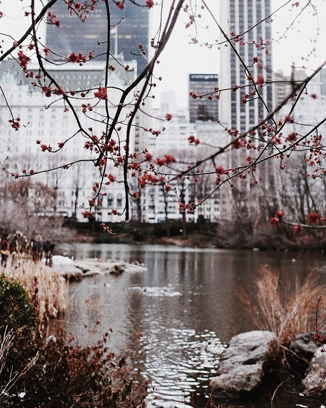 Central Park wander this afternoon. Freezing. But so refreshing. ❄️