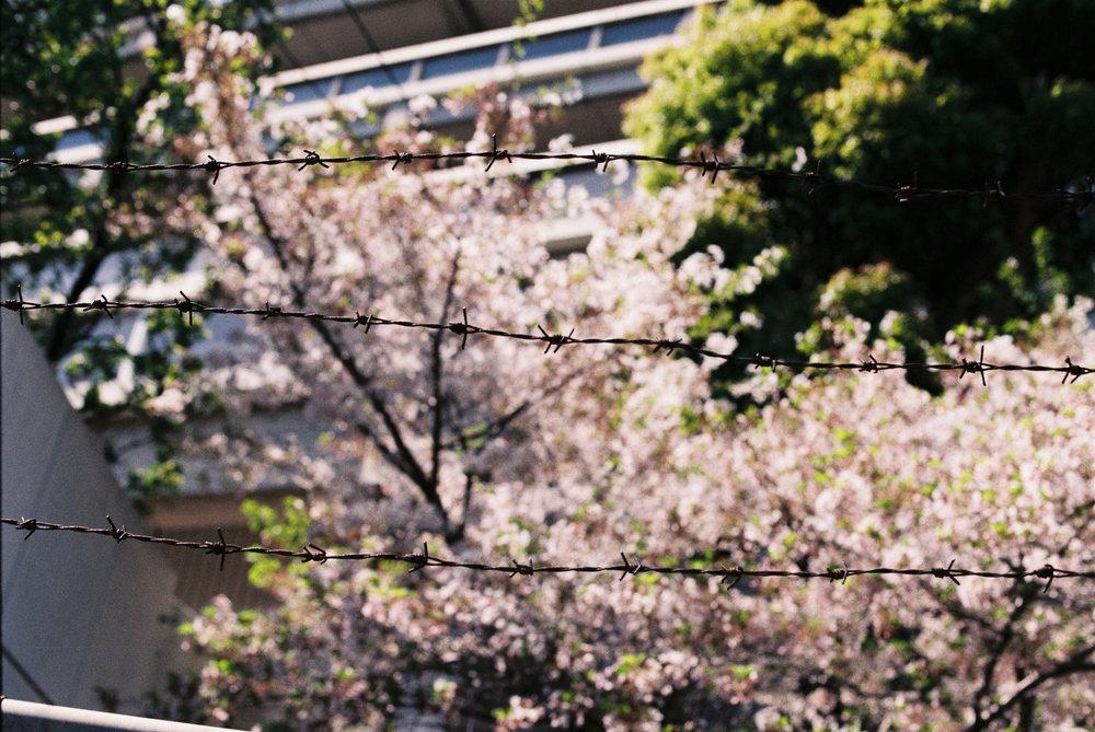 japan-11.jpg