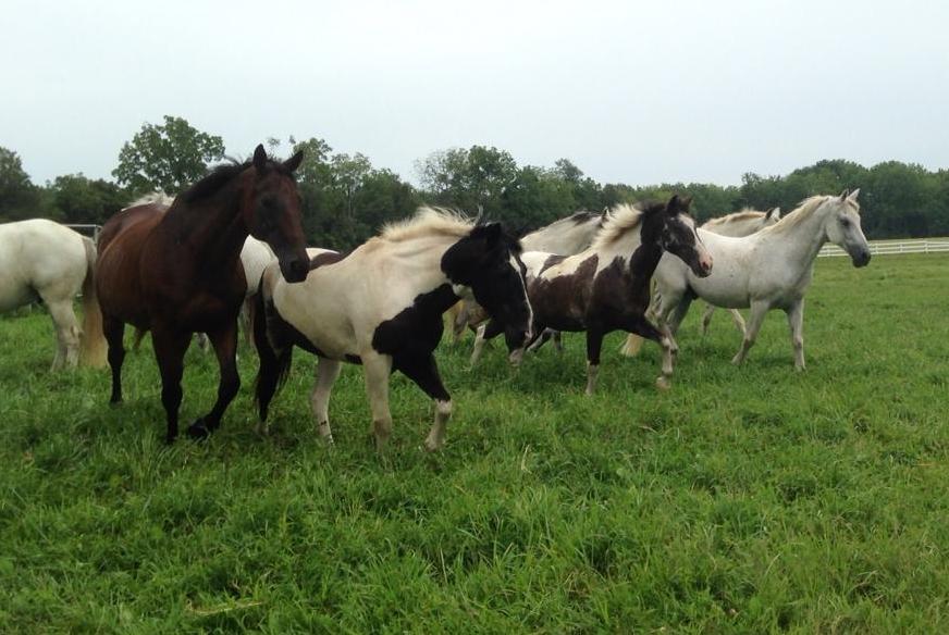 horsesrunningsummer.jpeg