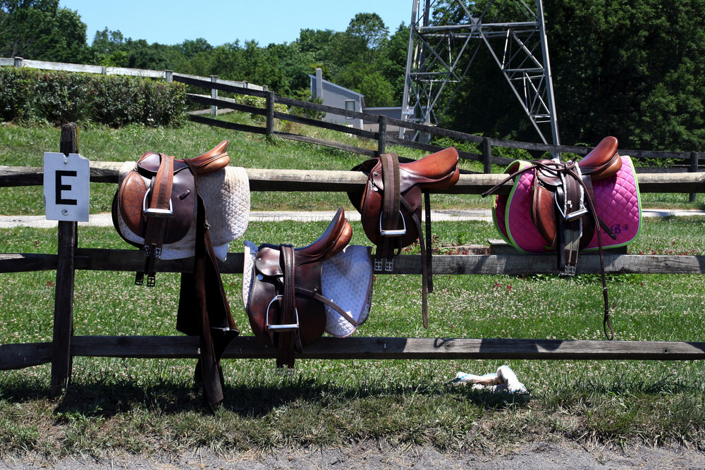 saddles on fence.jpeg
