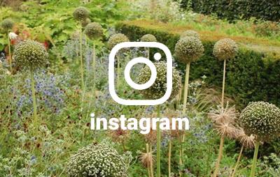 grasveld op instagram