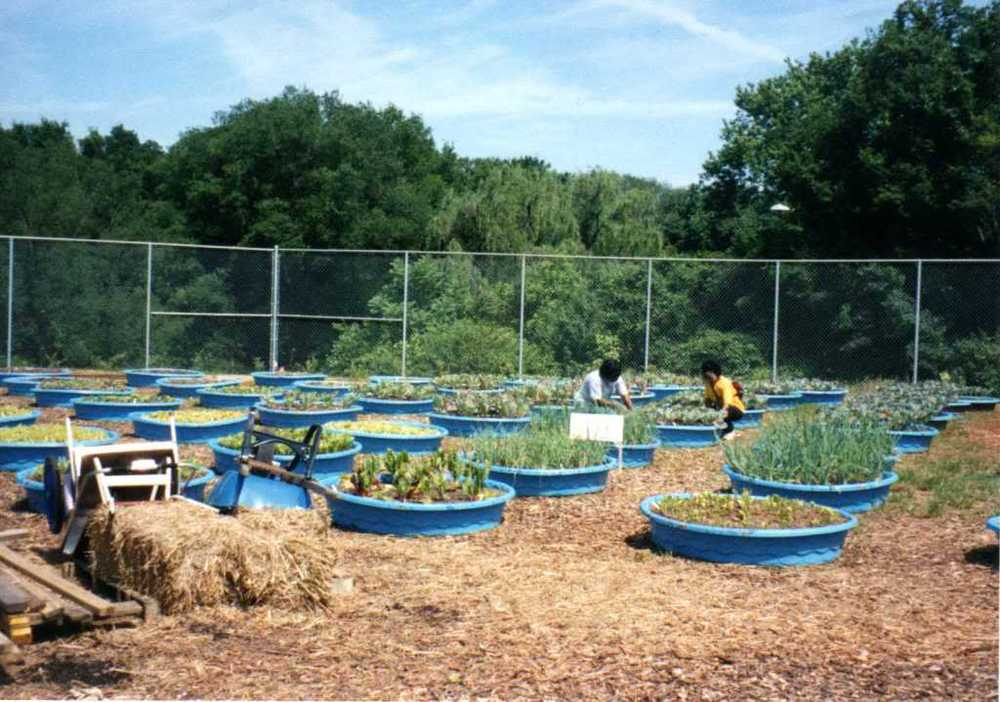 IMAGE DESCRIPTION:  Beardsley Farm's original raised beds! a fenced-in area with around two-dozen blue kiddie pools. All the kiddie pools have vegetables and herbs growing in them. Two people are seen working in one of the beds.