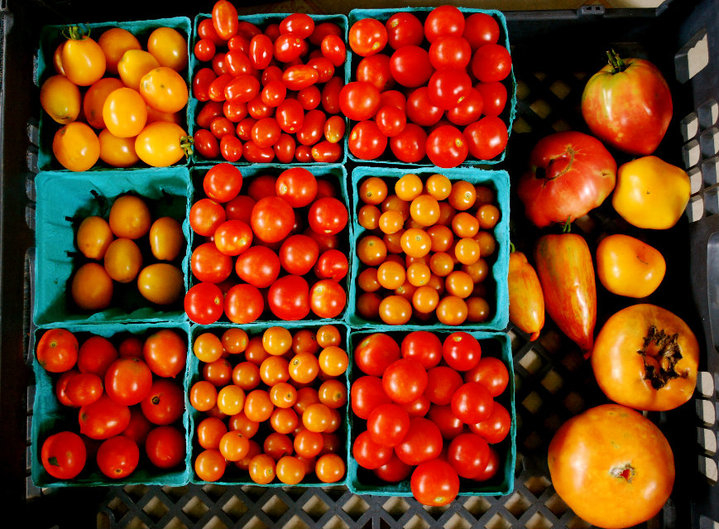 IMAGE DESCRIPTION:  A close-up of tomatoes. The right third of the image has yellow and red heirloom and roma tomatoes. The other two-thirds of the image have orange, red, and yellow cherry tomatoes in nine small turquoise cartons.