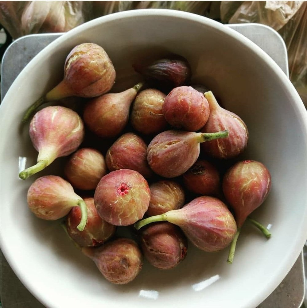 IMAGE DESCRIPTION: A white ceramic bowl filled with freshly-picked figs. The figs are mostly a brownish-red, fading to various shades of pink or yellow-green on some. Many have green stems on them.
