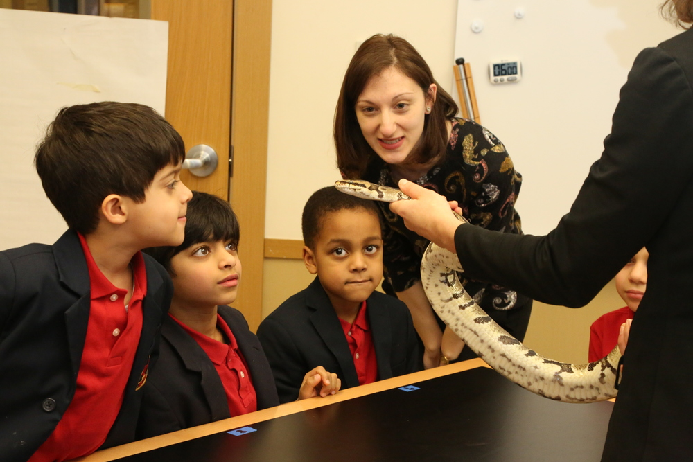 Ms. Kingsdale's Pre-primary boys observe a ball python in science class.