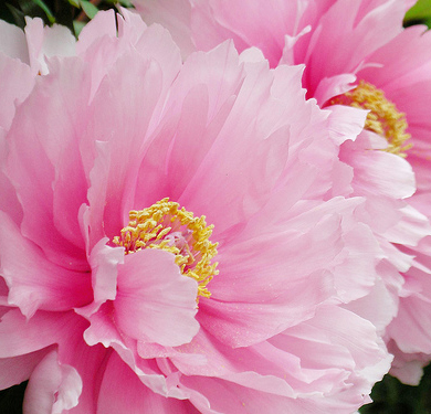 DONATE FLOWERS