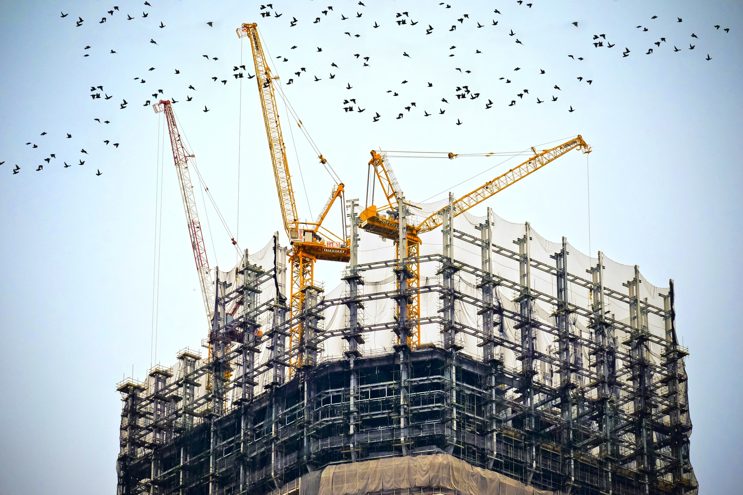 cranes and construction