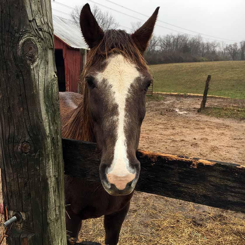 Horse neighbor.