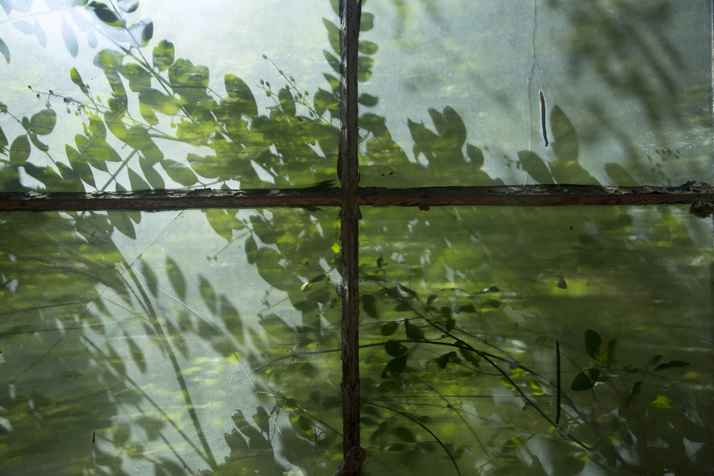 Shadows Leaves on the Glass window-2.jpg