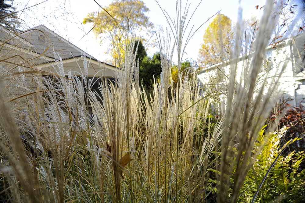 Grasses_bright.jpg