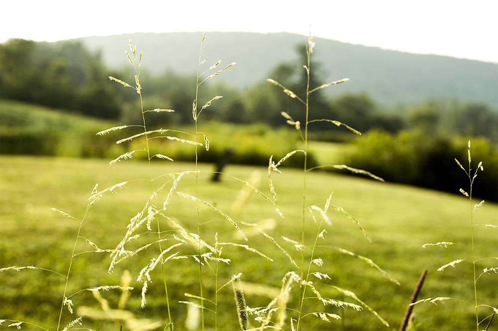 Meadow walk_backlit plants.jpg