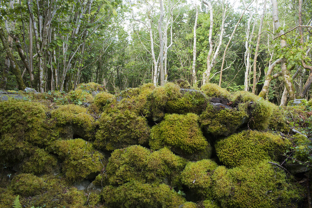 Big mossy rocks.jpg