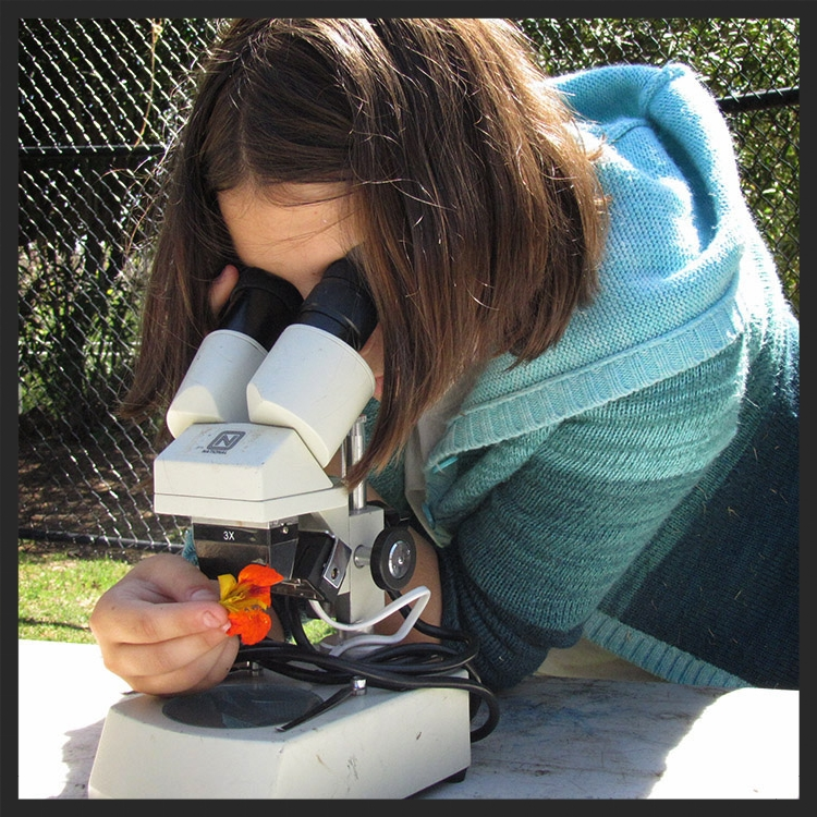Botany & Microscopes