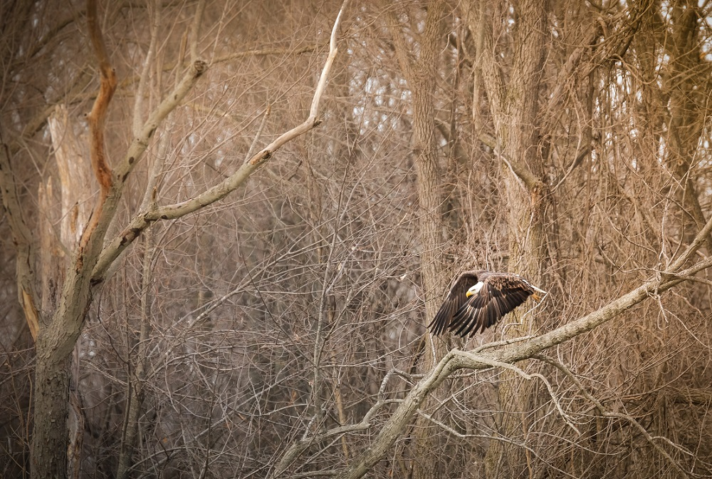 You will see a variety of wildlife at our facility. We have a nesting pair of Bald Eagles that have called the park home for four years now! You can see them daily flying over the lake and if you're lucky, you can witness their fishing expertise!